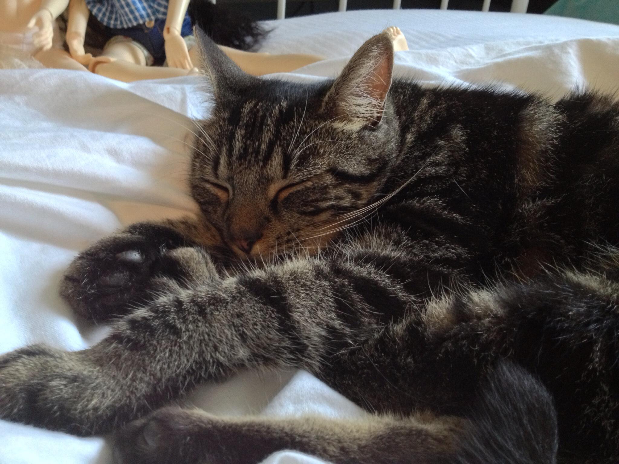 Loki asleep on Mams bed